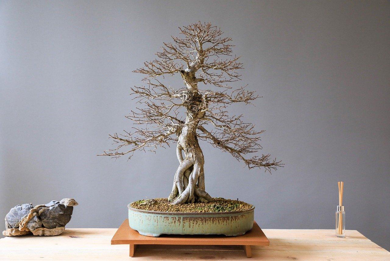 bonsai-3125715_1280.jpg