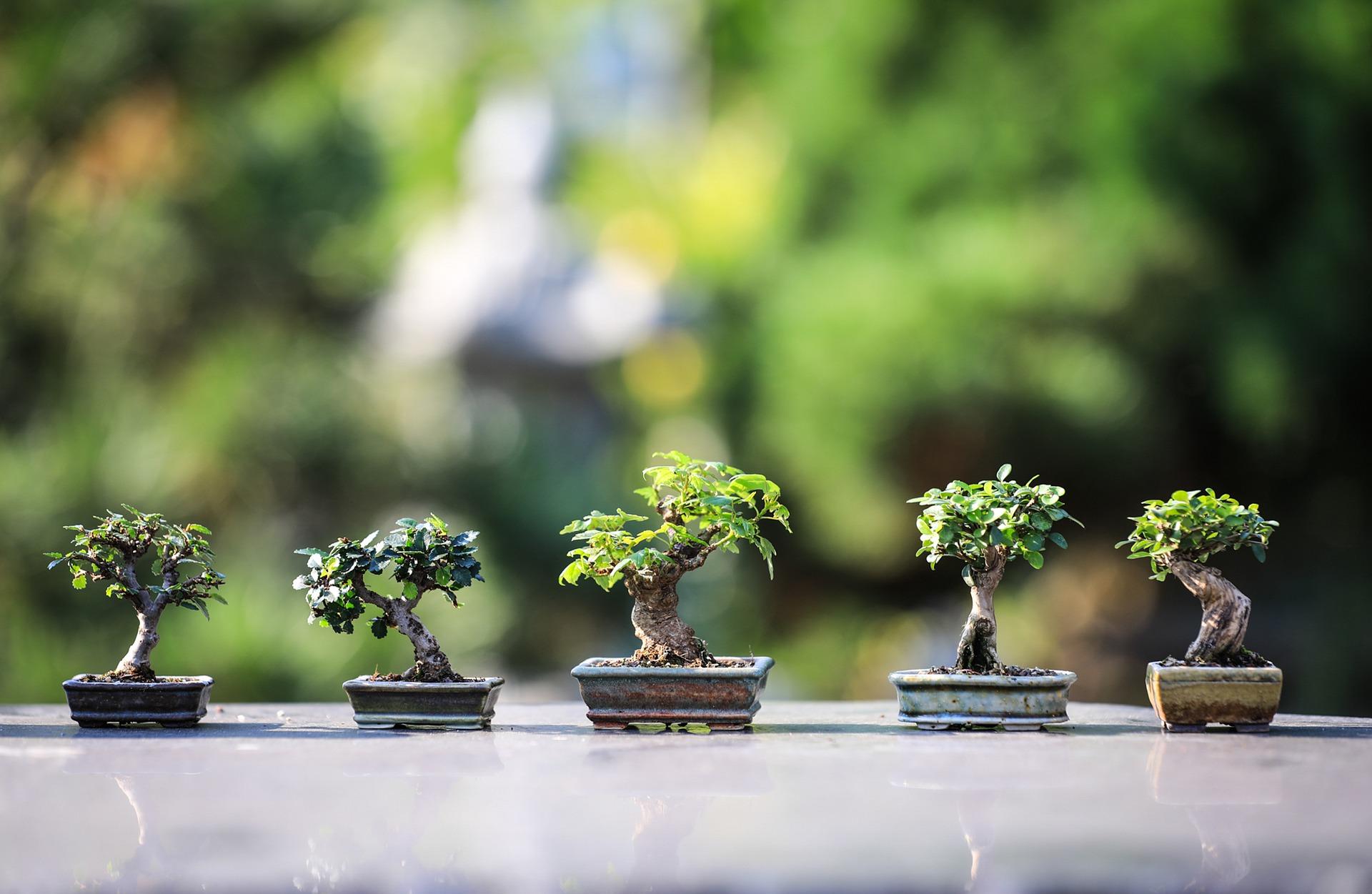 bonsai-4634225_1920.jpg
